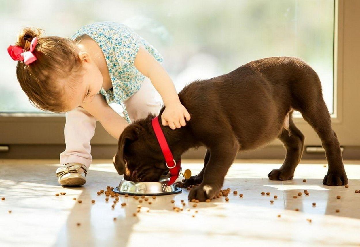 6 преимуществ домашних животных для детей :: инфониак