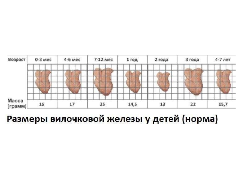 Компьютерная томография вилочковой железы, кт и мрт исследование тимуса