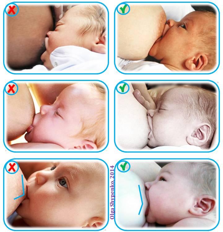 Как правильно прикладывать ребенка к большой и маленькой груди в первый раз и при последующих кормлениях: правильное положение новорожденного ребенка при кормлении грудью с фото и видео инструкциями   qulady