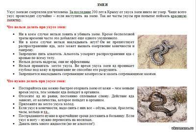 Ребенка укусила гадюка: что делать, как оказать первую помощь при укусе ядовитой змеи?