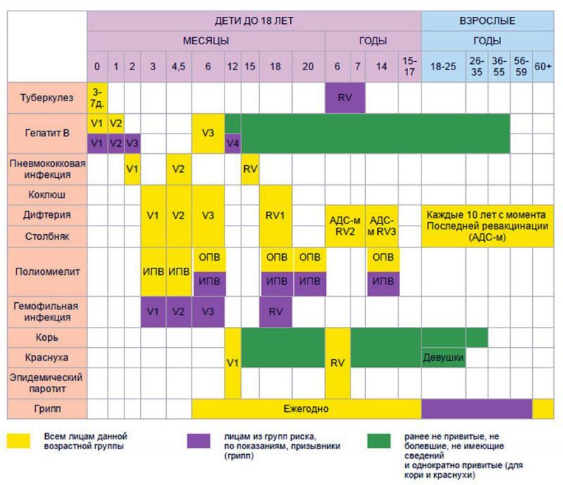 Прививки детям до года: список и график обязательных вакцин