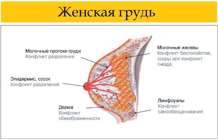Состав грудного молока женщины: таблица по месяцам