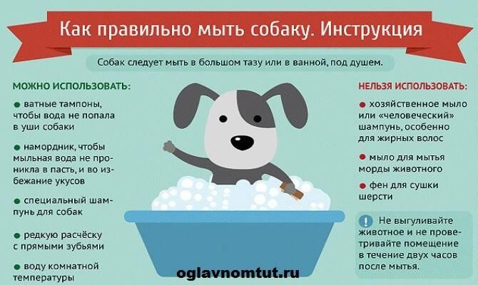 Какое домашнее животное лучше завести в квартире: советы по выбору, уходу и содержанию - animallist.ru