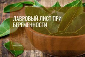 Сколько нужно лаврового листа для прерывания беременности. как приготовить отвар из лавровых листьев для прерывания беременности