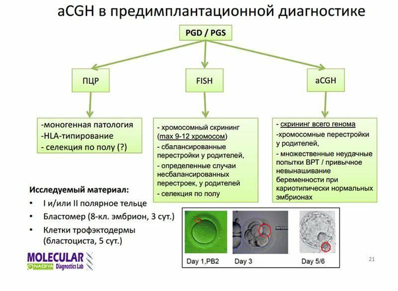 Предимплантационная генетическая диагностика в программе эко (пгд) | проблемы мужского и женского бесплодия и методы их решения