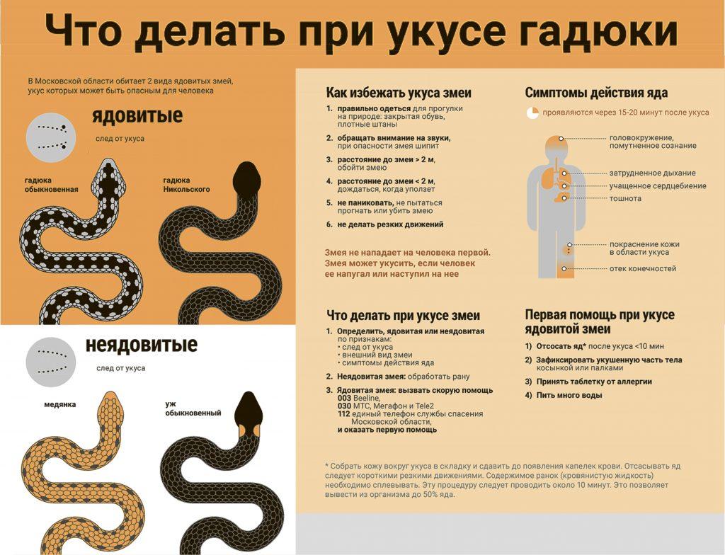 Первая помощь при укусе змеи: краткий алгоритм действий