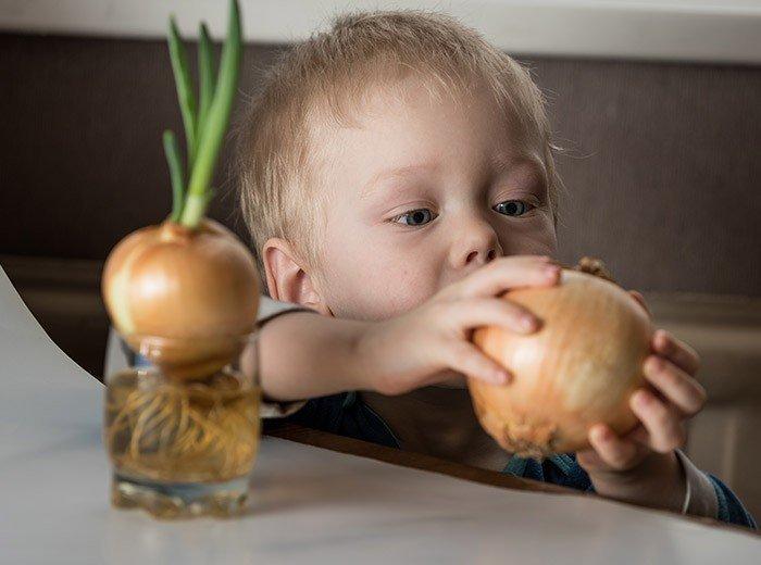 С какого возраста можно давать ребенку зеленый и репчатый лук