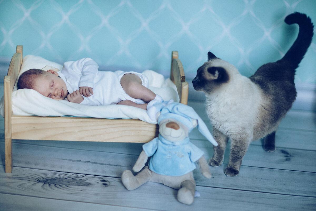 Фотосессия новорожденных: идеи, реквизит, фото   активная мама