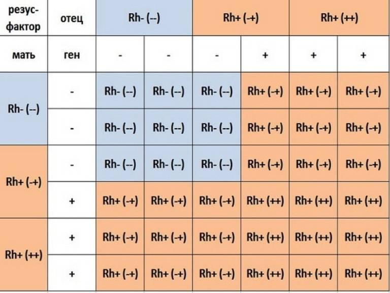 Анализ на определение резус-фактора крови плода по крови матери