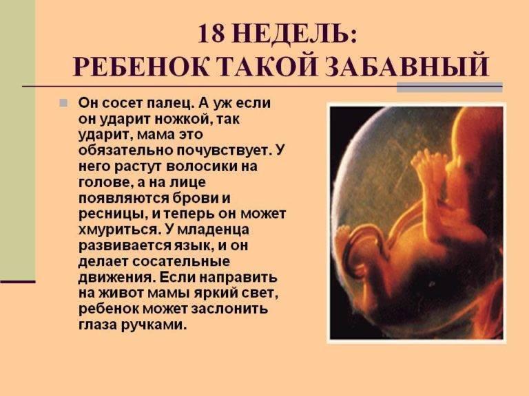 19 неделя беременности: что происходит с малышом и мамой | развитие и размер плода, ощущения женщины на 19 неделе беременности