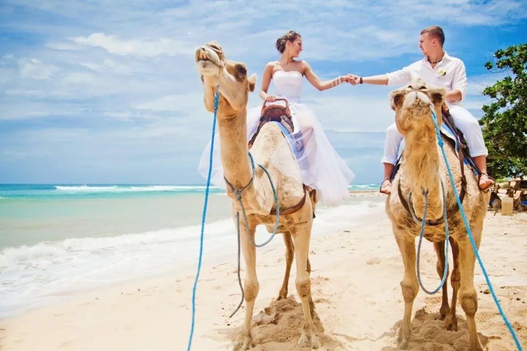 Где лучше отдыхать в египте на море — 9 курортов