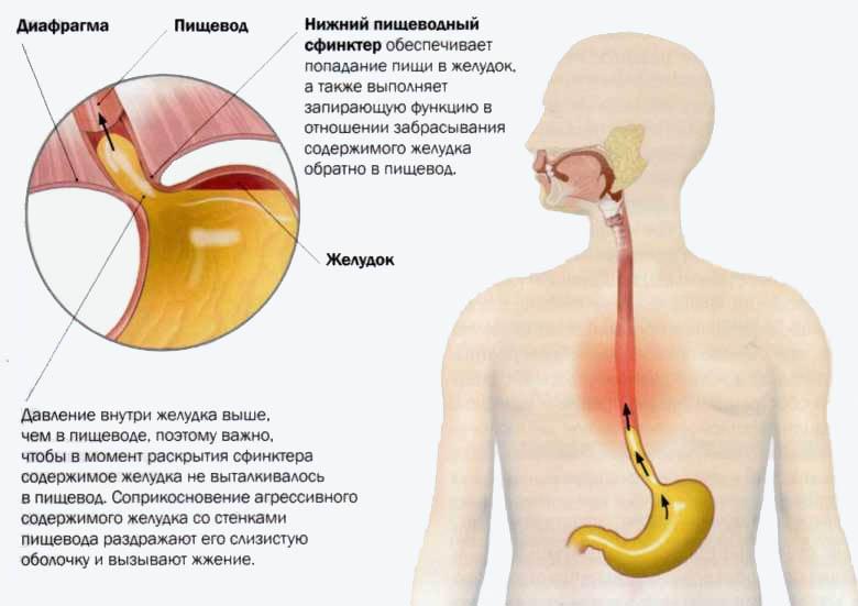 Как заставить желудок работать после рвоты. остановился желудок: какие первые признаки, как лечить