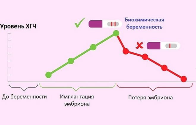 Может ли хгч ошибаться, и если да, то почему возможны ошибки при анализе крови на хгч?