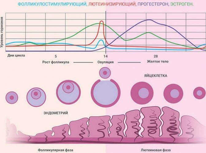Кремообразные выделения после овуляции: виды, возможные заболевания, признаки оплодотворения