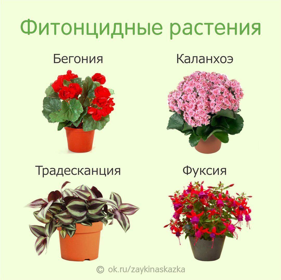 Топ-15 комнатных растений для детской | (25 фото) +отзывы