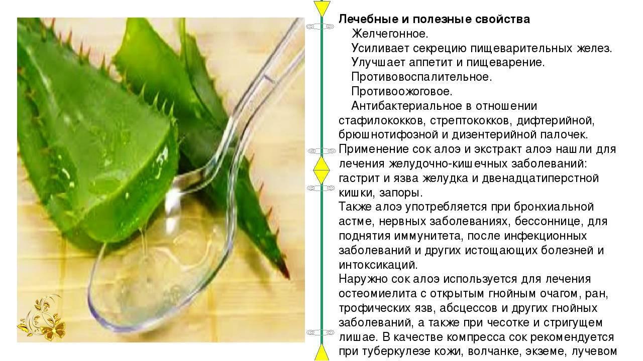 Алоэ от насморка: 5 рецептов, взрослым, детям, беременным и кормящим