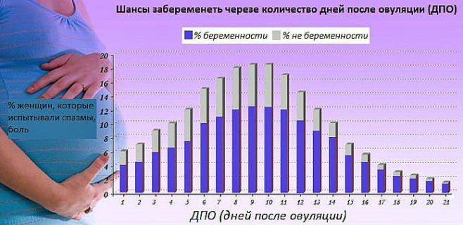 Шанс забеременеть с первого раза: мифы и статистика