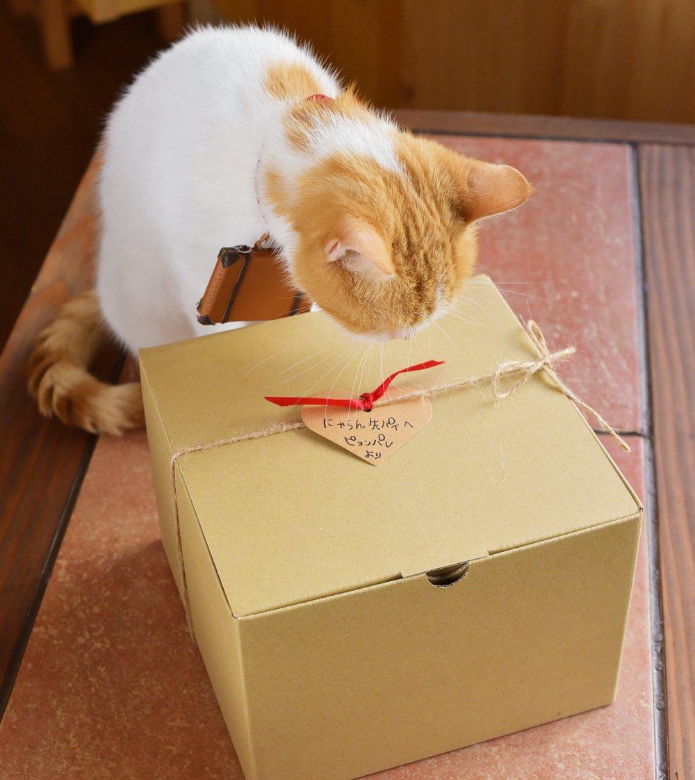 Как оригинально подарить котенка на торжество