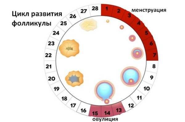 Калькулятор – опасные и безопасные дни для зачатия: таблица неблагоприятных дней, когда можно забеременеть