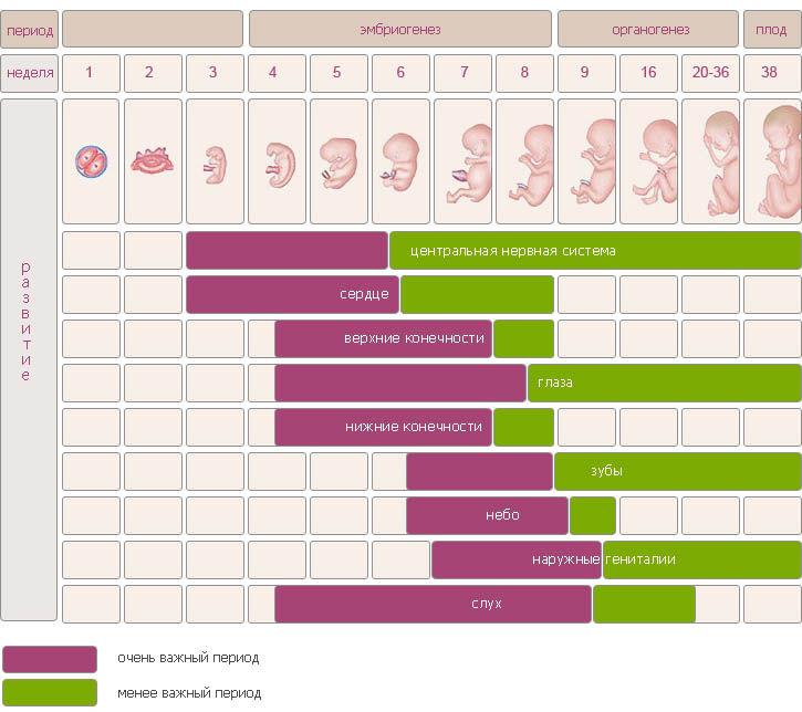Как рассчитать дату зачатия? расчет по пдр, последним месячным – онлайн-калькулятор, по дате рождения