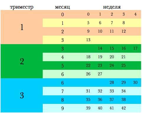 Триместры беременности по неделям в виде таблицы, с какого дня начинаются, сколько и как длятся