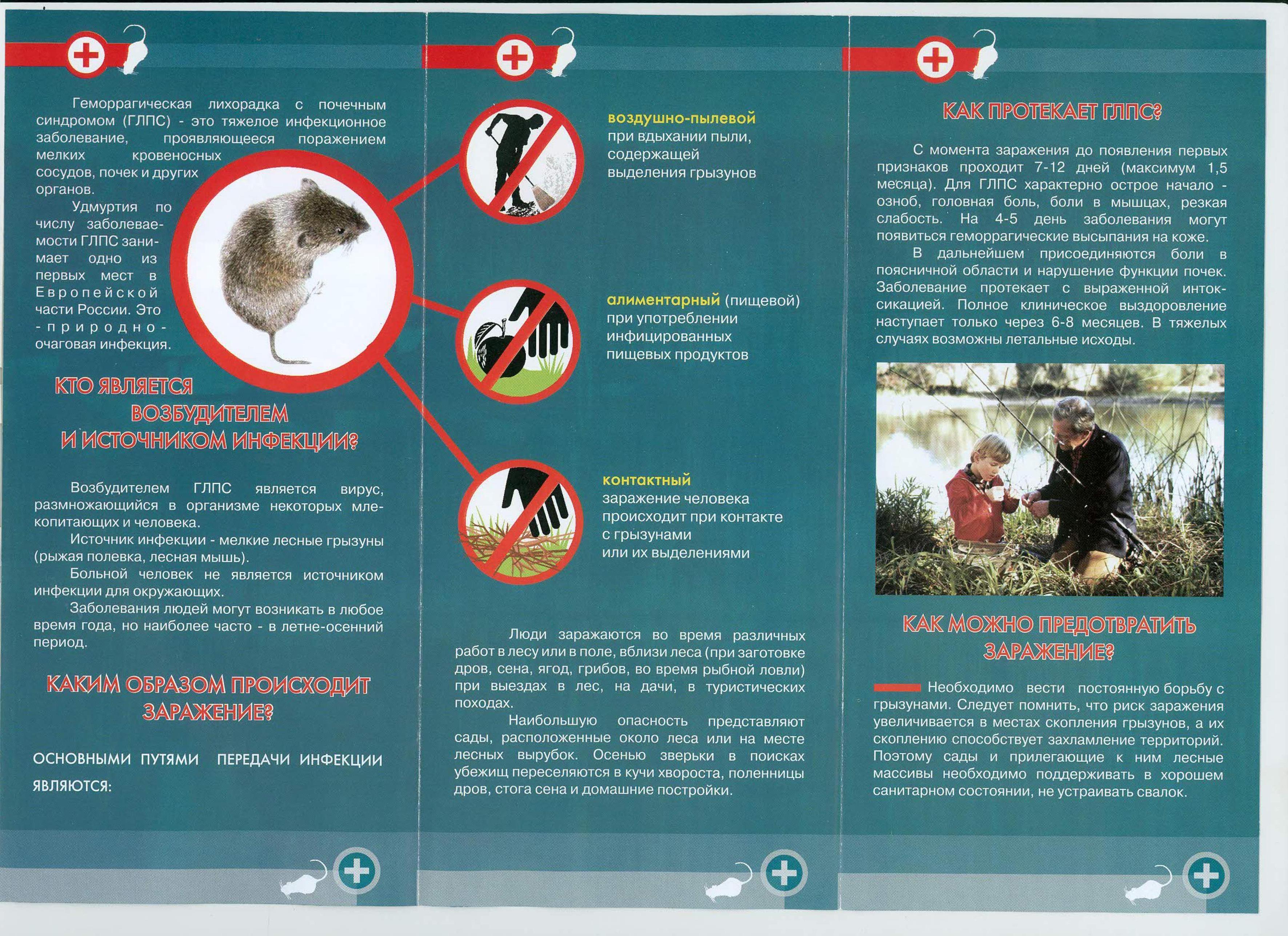 Может ли быть мышиная лихорадка без температуры. мышиная лихорадка: признаки, лечение и методы профилактика