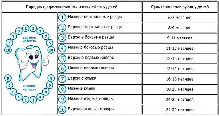 Сроки прорезывания молочных зубов у детей: таблица родителям