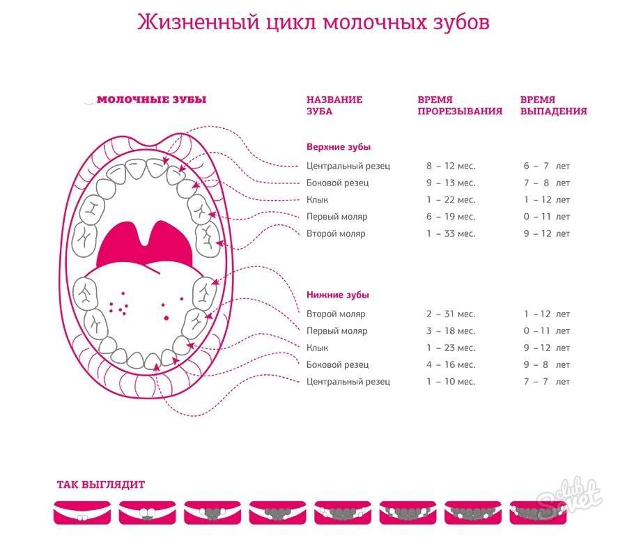 Сколько дней держится температура в период прорезывания зубов у детей: способы ее снижения, побочные симптомы