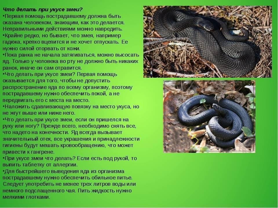 Первая медицинская помощь при укусе змеи: что делать?