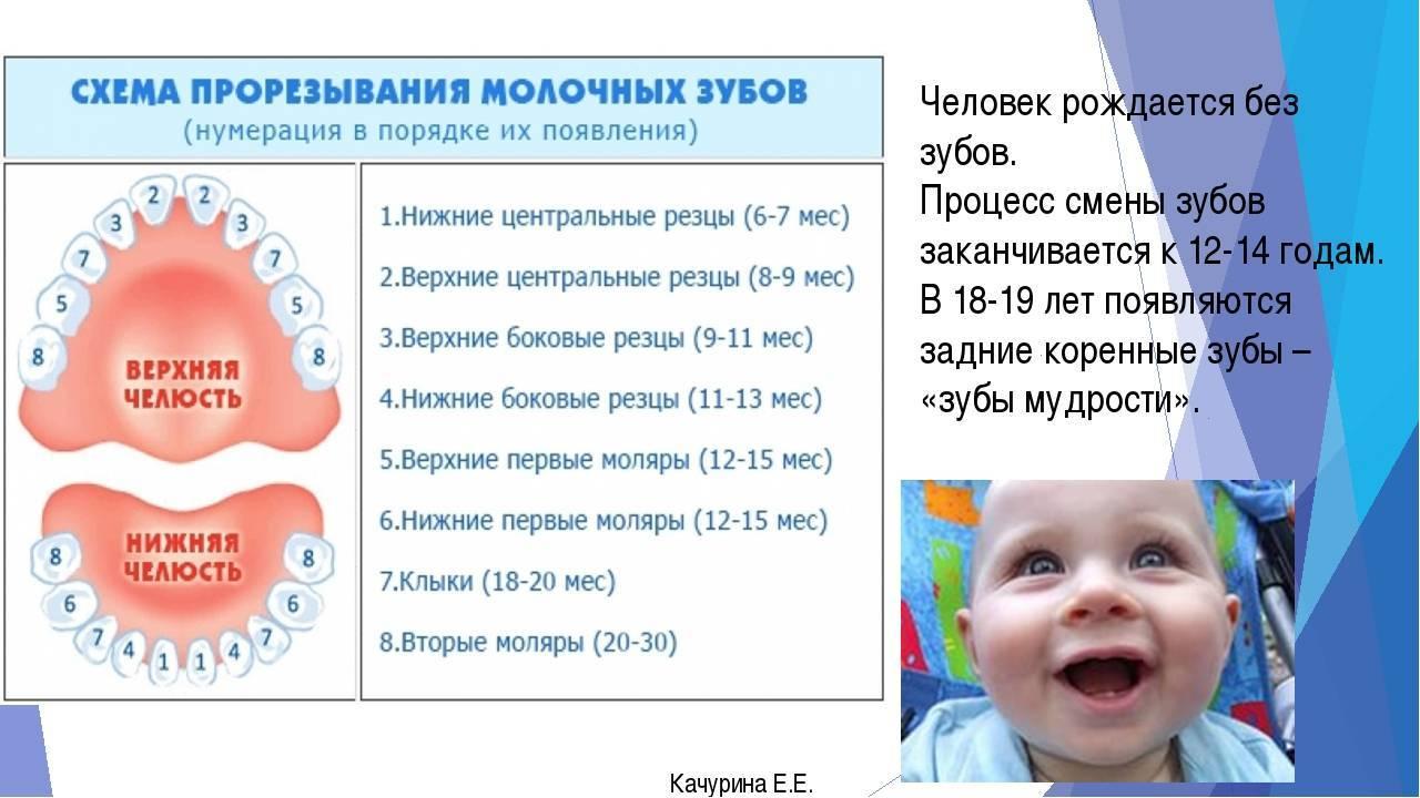Первые зубки у грудничка: когда они начинают расти, во сколько будут резаться зубы у новорождённого