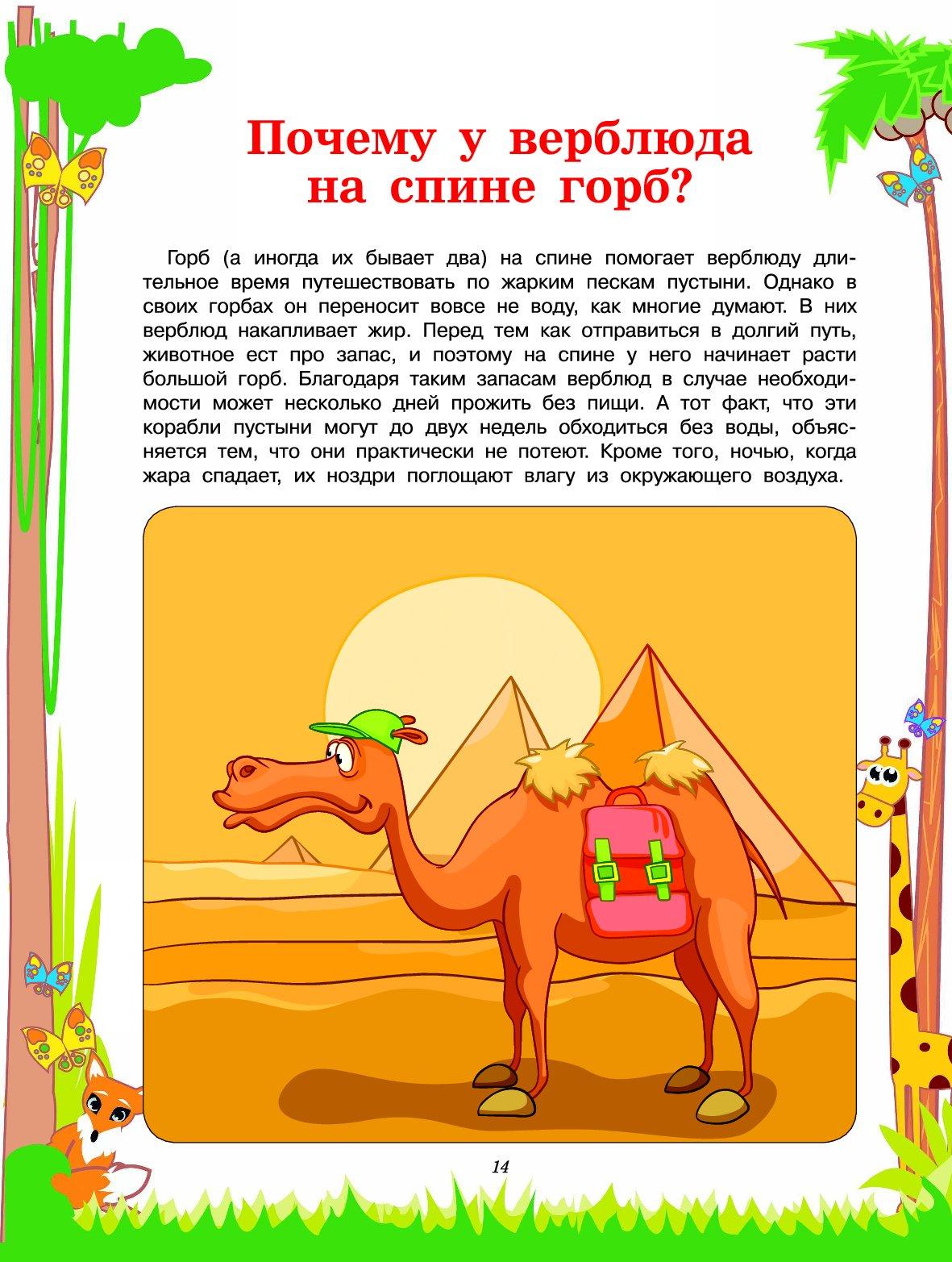 Почему плюются верблюды? описание, причины, фото и видео - «как и почему»
