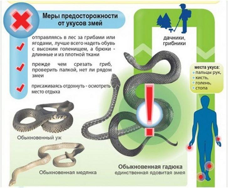Что делать, если змея укусила ребенка?