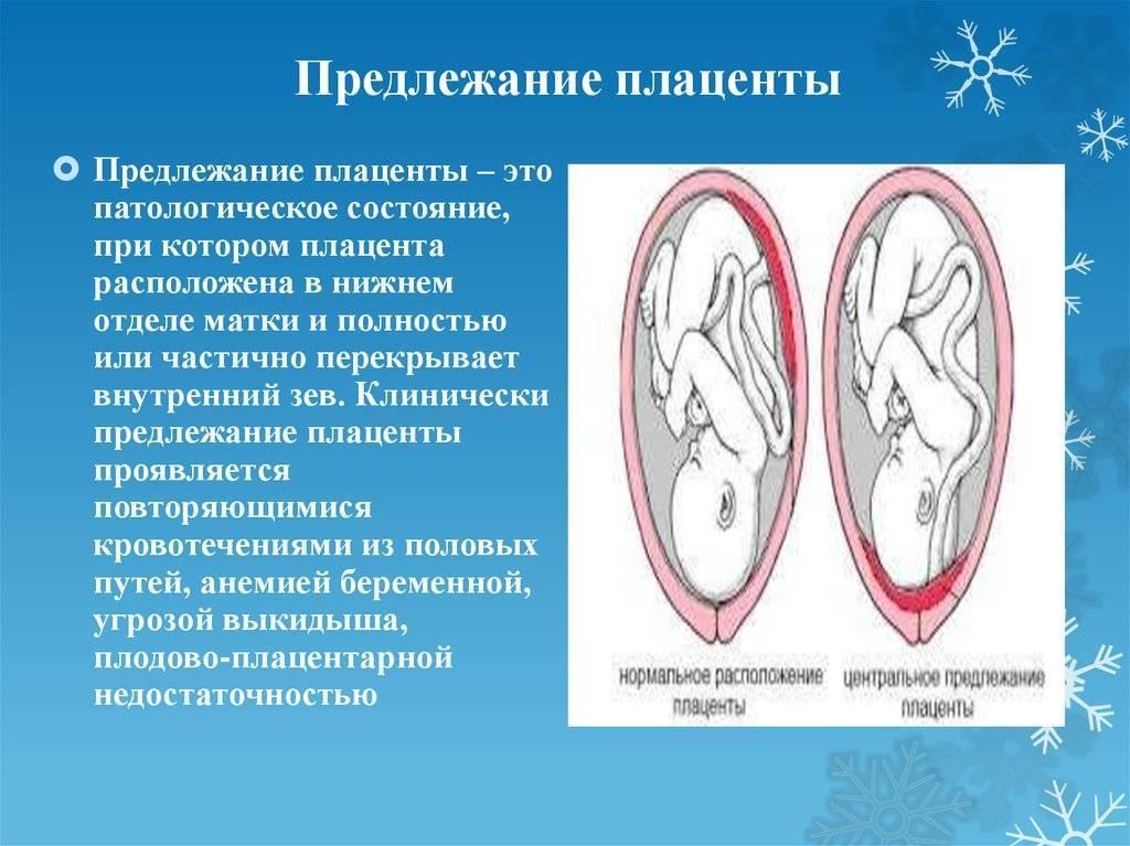Плацента по передней стенке (21 фото): что значит расположение по передней стенке матки, краевой предлежание и другие виды локализации
