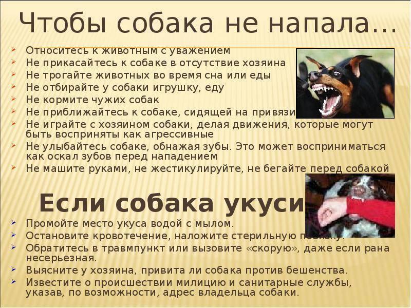 Первая помощь при укусе собаки: что необходимо делать