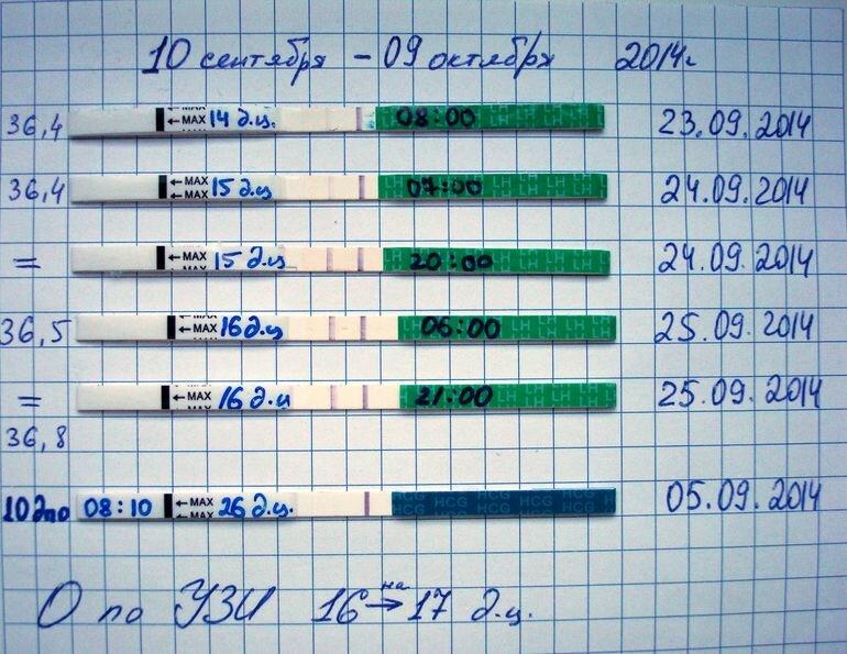 Узи-мониторинг овуляции – фолликулометрия (+ расшифровка!) - овуляция
