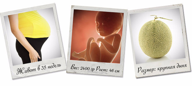 21 неделя беременности: что происходит с плодом и мамой