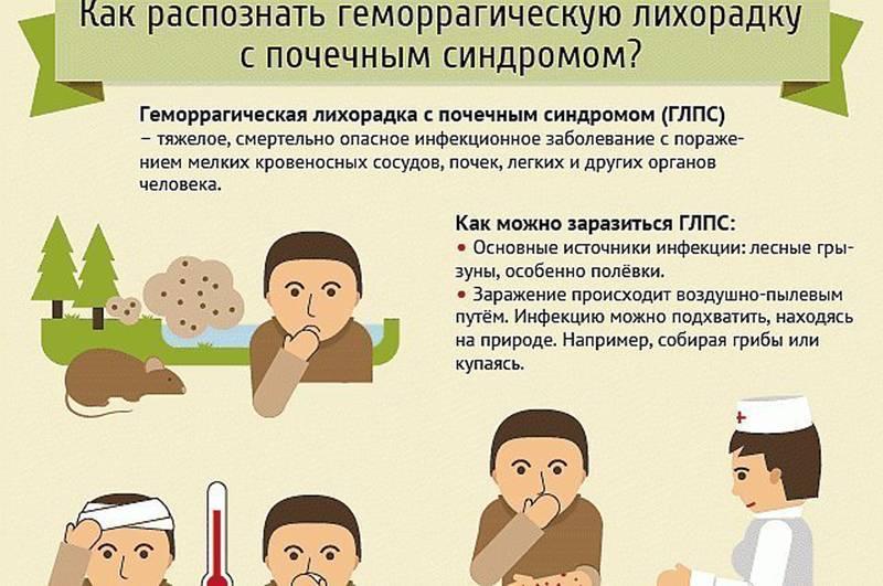 Мышиная лихорадка симптомы у детей |  детское здоровье | формула здоровья