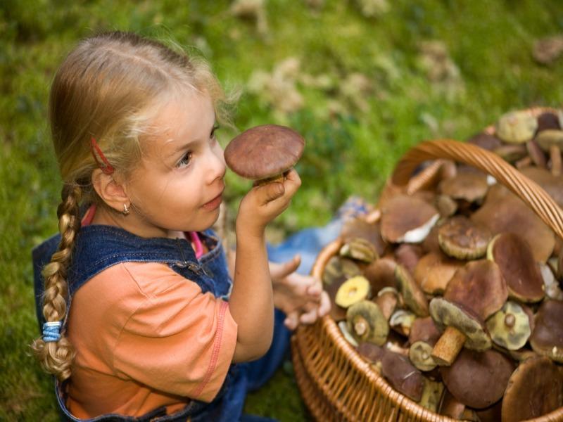 С какого возраста можно грибы детям   уроки для мам