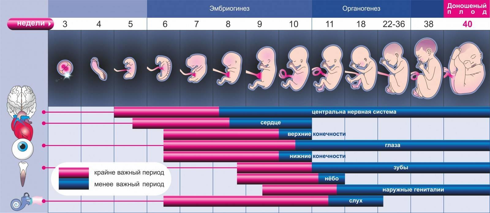 Почему отличаются акушерский срок беременности и реальный