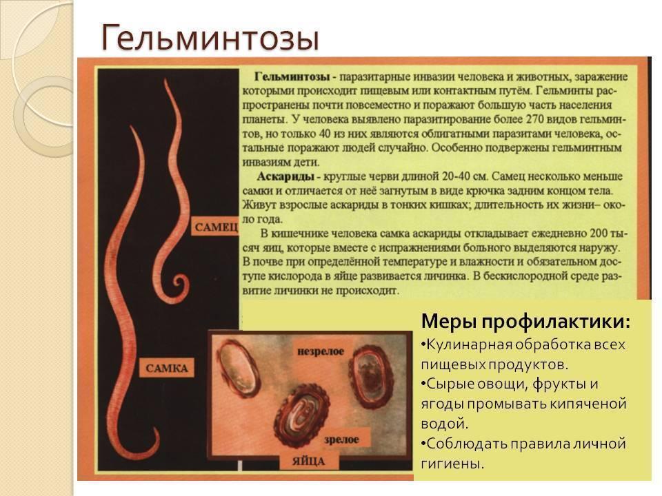 Энтеробиоз — острицы у детей: симптомы и лечение, диагностика и профилактика