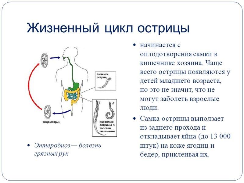 Энтеробиоз (острицы). причины, симптомы, современная диагностика, эффективное лечение и профилактика заболевания.