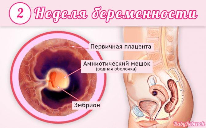 Признаки беременности на 1-ой неделе: что происходит в это время