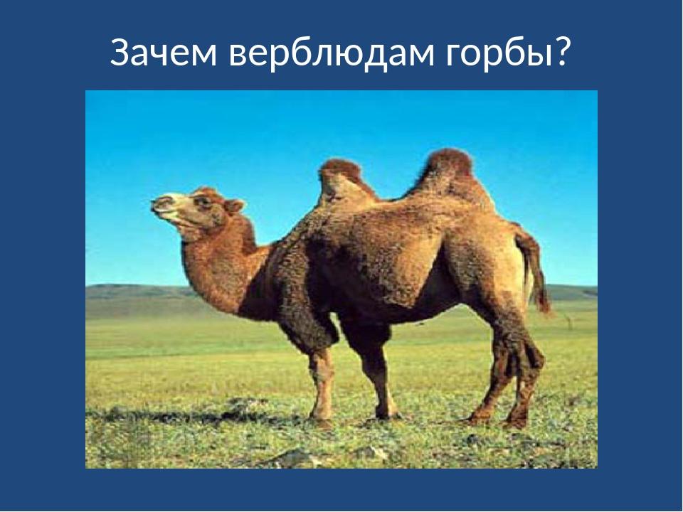 Для чего верблюду нужен горб. как объяснить ребенку 3-5 лет зачем верблюду горбы | интересные факты