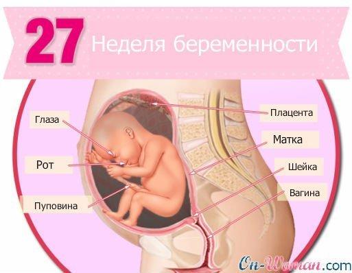 Развитие плода на 27 неделе беременности (17 фото): что происходит с малышом, где расположен ребенок и как выглядит, вес и размеры, активность и ощущения