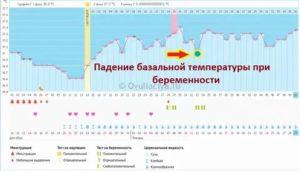 Показатели базальной температуры перед, во время и после месячных
