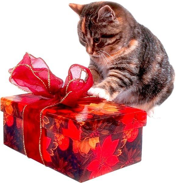 Котенок - подарок не для каждого - иркутская городская детская поликлиника №5