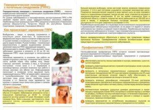 Мышиная лихорадка у детей: симптомы, первые признаки и лечение, как проявляется у ребенка 2 лет