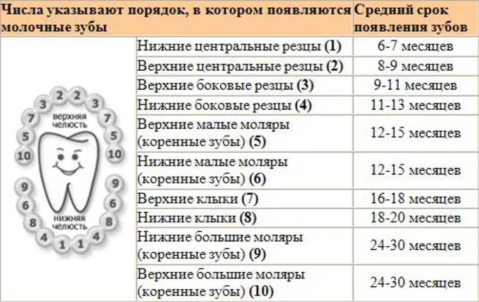 Температура при прорезывании зубов у детей: сколько дней держится?