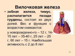 Мрт и кт детям. кт и мрт диагностика нормального тимуса у детей