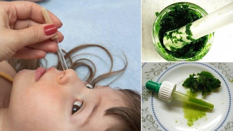 Сок алоэ при насморке у детей — плюсы и минусы этого метода лечения, меры предосторожности